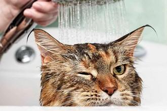 kupanie-kota.jpg